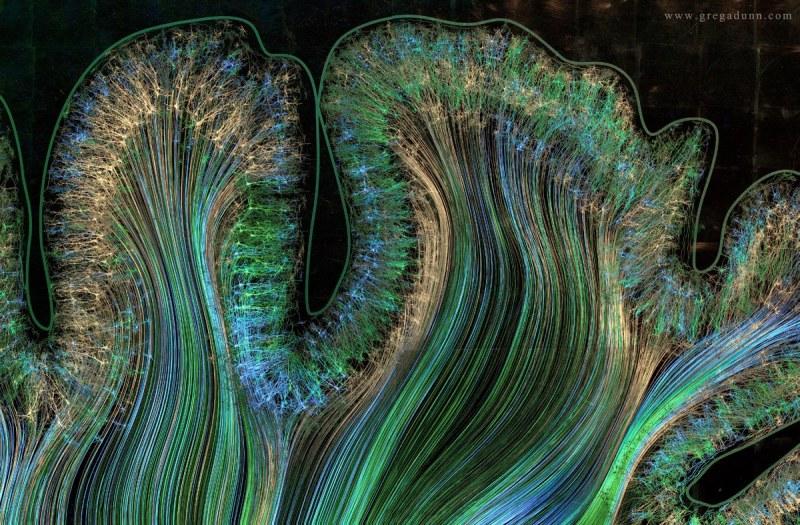 Motor-and-Parietal-cortex-2