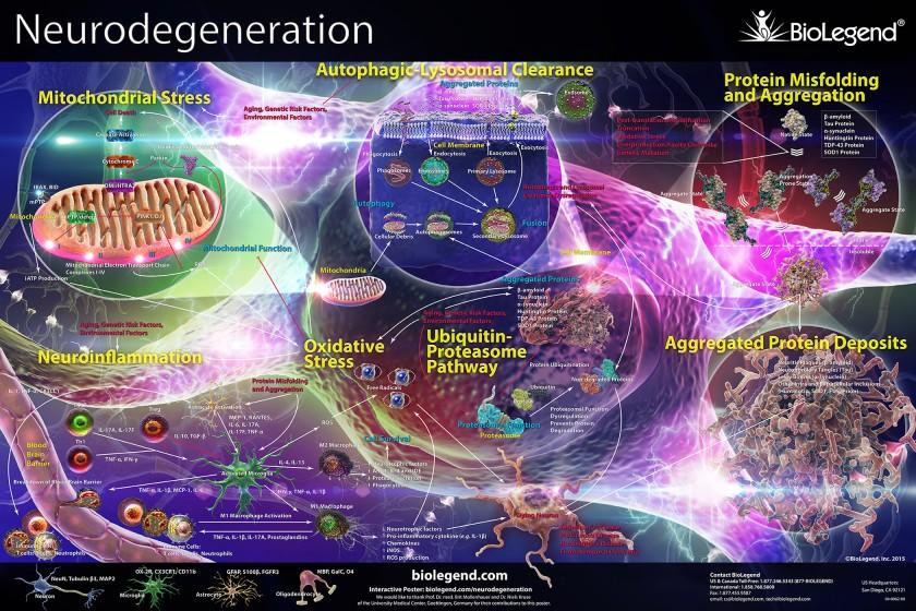 neurodegeneration_small