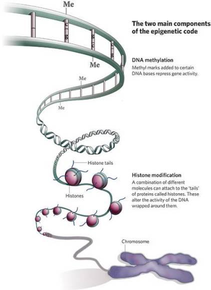 Epigenetic code