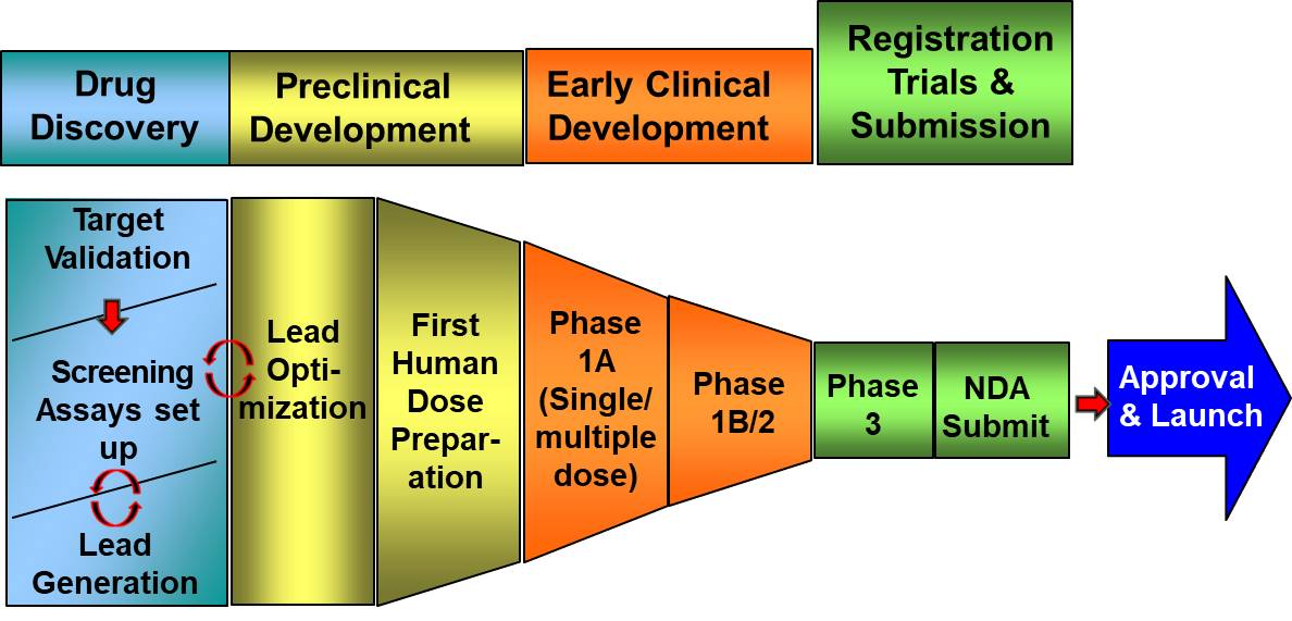 stages of new drug development